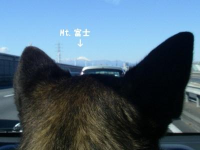 富士山の方に行くよ!