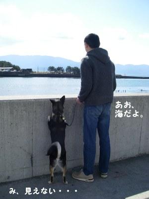 沼津港です
