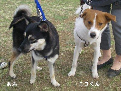 あお(左)とニコラスくん(右)