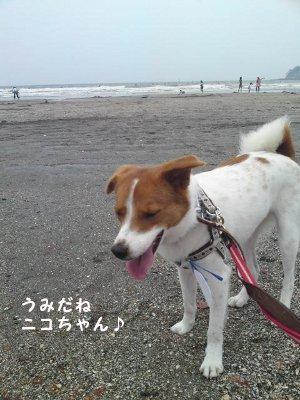 ニコちゃんと海