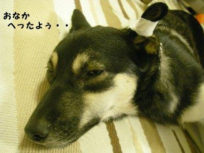 今日はやっぱり疲れました