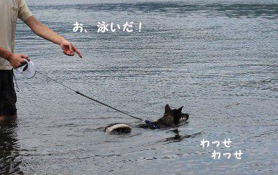 あお、泳いだ~♪