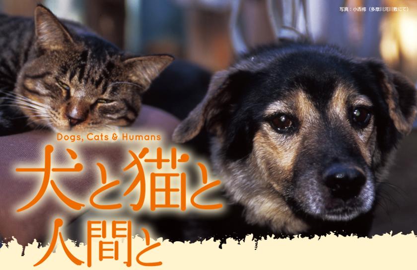 映画 『犬と猫と人間と』