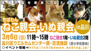 ちばわん品川ねこ親会・いぬ親会2011.3.6