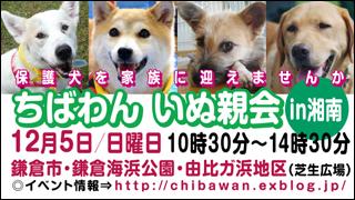 ちばわんいぬ親会in湘南