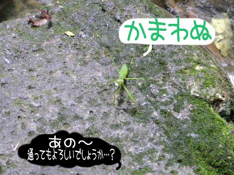 2011_09220032.jpg