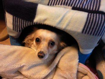 犬用のドームベッド