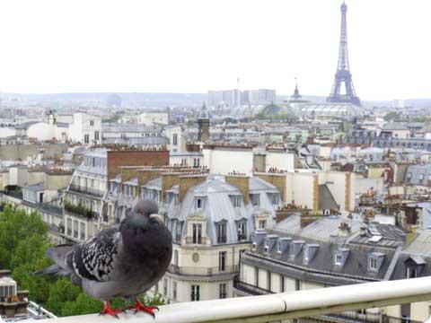 パリのハトさん