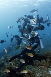 バリ島 トランバンの沈船ポイント 体験ダイビング