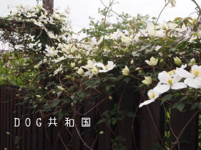 11061201.jpg