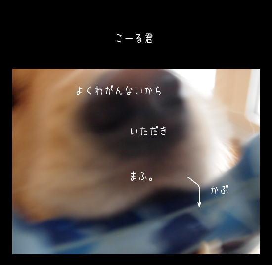 11121715.jpg