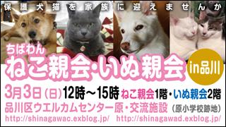 shinagawa33_320x180.jpg
