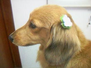 首輪に合わせて緑のお花をチョイス♪