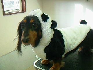 シャンプー後は、パンダに変身♪