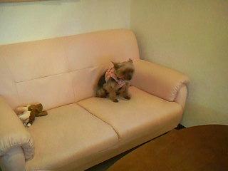 1番遠いソファーに避難避難☆