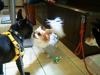 全く人見知り犬見しりをしないキュートなリュウ君♡