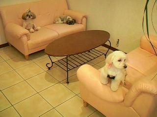 みんな大好きなソファーでのんびり♪