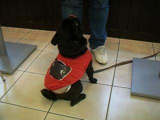 黒パグTシャツ♪♪
