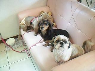 看板犬3人♡