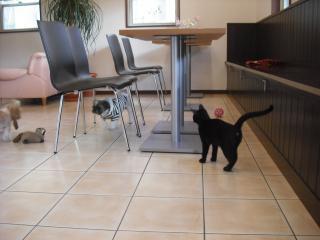 猫カフェ?!