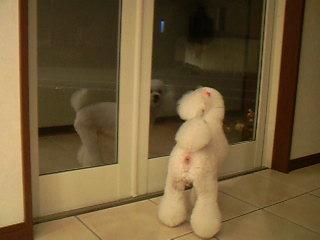 外を眺めるアリスちゃん☆