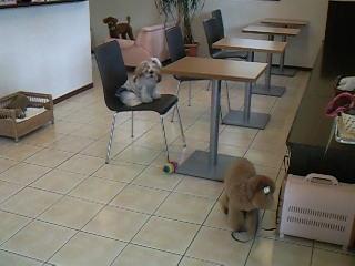 カフェにて☆