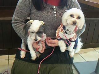 ミックス犬2人♡