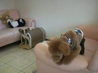 犬の幼稚園♪