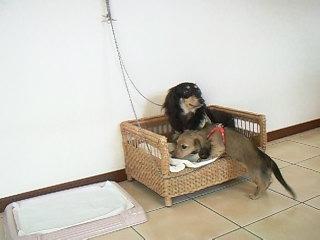 ベッド大好き♪