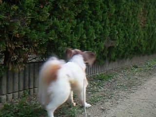 お散歩お散歩♪