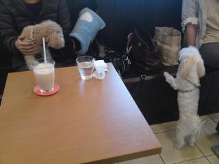 にぎやかドッグカフェ♪