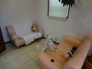 ドッグカフェで過ごすペットホテル♪