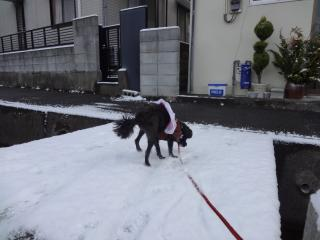 新雪の上をお散歩♪