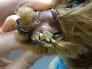 歯石がビッシリ!