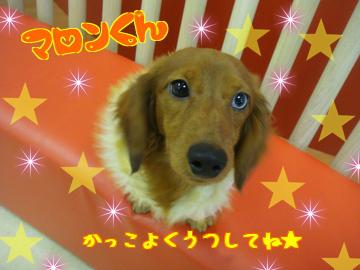 ☆マロンくん☆