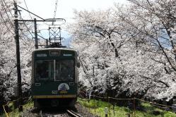 鳴滝~宇多野間(2010.4.4)