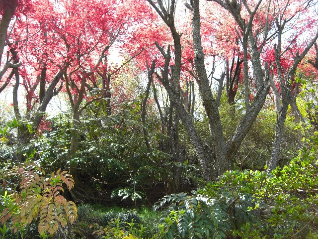 2010GW東京~札幌22