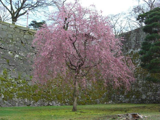 2010GW東京~札幌34