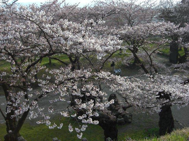 2010GW東京~札幌36
