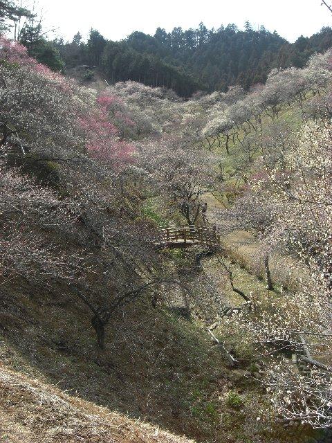 20110312吉野梅郷02