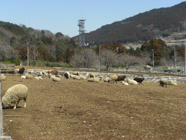 20110327宮ヶ瀬06