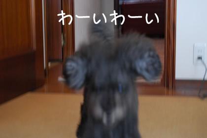 01_20110905232112.jpg