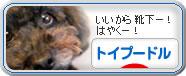 にほんブログ村 犬ブログ トイプードル