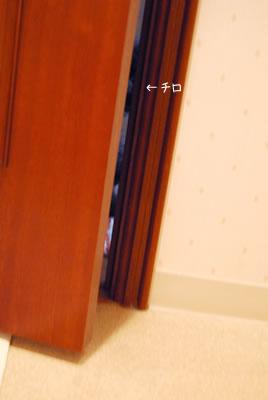 dsc_9764.jpg