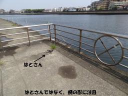 110814_11V.jpg