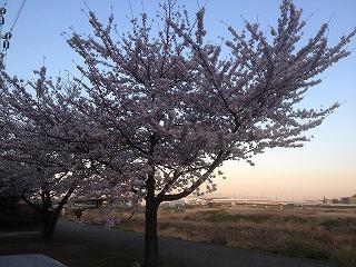 20120407-桜03