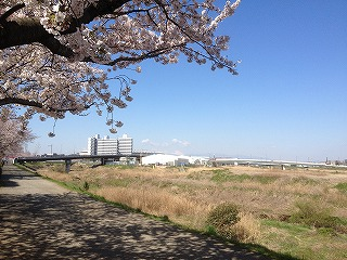 20120407-桜01