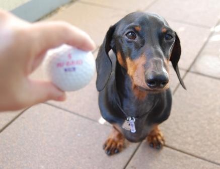 golfa.jpg