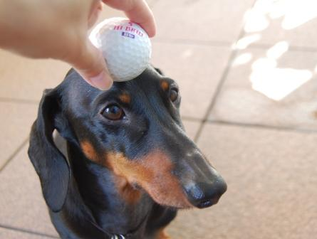 golfa1.jpg
