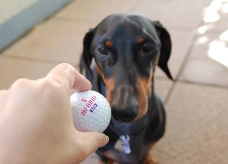 golfa2.jpg